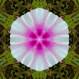 Patterned white flower with pink sed royalty free stock image