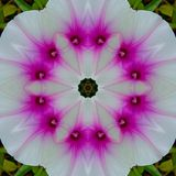 Patterned white flower with pink sed stock photo