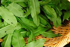 Patterned wicker basket with forest sorrel. Fresh green sour tasty sorrel Stock Photos