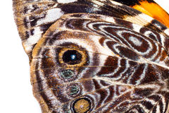 Patterns in a butterfly wing Stock Image