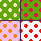Patterns with daisies Stock Photos