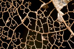 Patterns in a decaying leaf. Closeup of patterns in a decaying leaf Stock Image