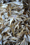 Patterns of dried fish Stock Photos