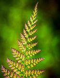 Patterns of ferns Stock Image