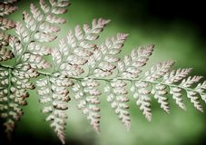 Patterns of ferns Royalty Free Stock Photography