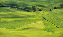 Patterns in the fields. Wheat and peas in late Spring in the fields and rolling hills of the Palouse Stock Photography