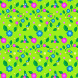 Patterns of flowers on a seamless background Royalty Free Stock Images