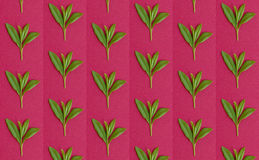 Patterns with fresh leaves Stock Photography