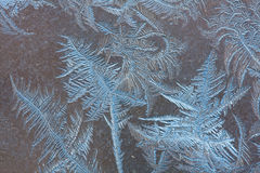 patterns of frost on the winter glass Stock Image