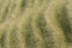 Patterns in grassy hillside. Wiltshire. England Royalty Free Stock Photos