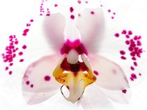 Free Patterns In Nature - Orchid Royalty Free Stock Images - 119601589