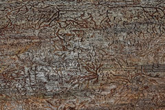 Patterns of insects. On a dried-up fallen tree Stock Photography