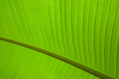 Patterns of leaf Stock Photography