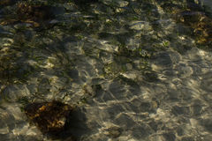 Patterns of light on the seaweed and sand on the seabed Royalty Free Stock Photos