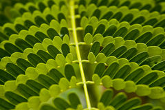 Patterns made by leaves royalty free stock image