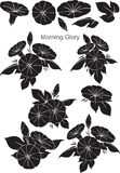 Patterns Morning Glory with black Royalty Free Stock Photography