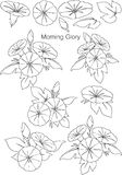 Patterns Morning Glory with line Royalty Free Stock Images