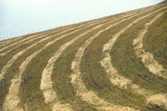 Patterns in mowed grain field, Northern CA Royalty Free Stock Images