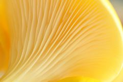 Patterns of a Mushroom Stock Photos