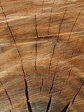 Patterns are not broken. In the stump Royalty Free Stock Image