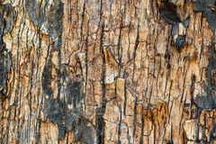 Patterns of old bark Stock Images