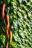 Patterns of peppers and Banana leaves 2 Stock Photo