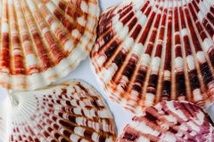 Patterns on the shells Stock Images