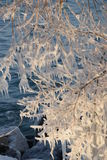 Patterns of spray ice on tree Royalty Free Stock Images