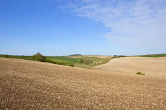 Patterns and textures of arable land in springtime. Patterns and textures of undulating chalky arable land in the yorkshire wolds in springtime under a blue sky Stock Photos