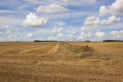 Patterns and textures of a cloudy summer sky over stubble fields Royalty Free Stock Photography
