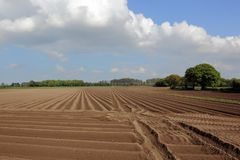 Patterns and textures of furrowed plow soil in a newly planted field of potatoes. Scenic landscape with beautiful trees and a farm track between fields of potato stock photo