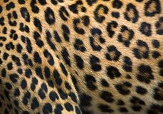 Patterns and textures of leopard. Patterns and textures of leopard for background stock image