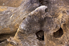 Patterns and Textures on Weathered Tree Stump Stock Image