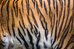 Patterns of tiger skin. Colorful patterns of tiger skin stock photo