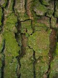 PATTERNS IN TREE BARK. Close up detail of a tree trunk showing the colours and textures of the tree bark Royalty Free Stock Photo