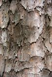 Patterns on a tree standing still in a park. royalty free stock photo