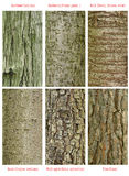 Patterns of trees trunk royalty free stock photos