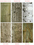 Patterns of trees trunk Stock Image