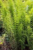 Patterns of Wild fern plant stock images