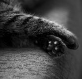 Pattes de chat Photos stock