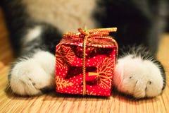 Pattes de chat avec une boîte rouge Photos stock