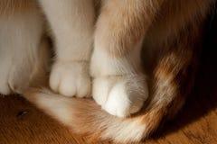 Pattes de chats Images libres de droits