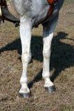 Pattes de cheval photo libre de droits