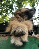 Pattes de chien images libres de droits