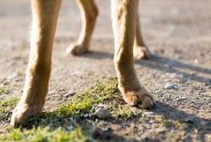 Pattes de chien sur la nature Photos libres de droits