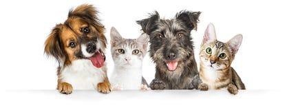 Pattes de chiens et de chats au-dessus de bannière de site Web photographie stock