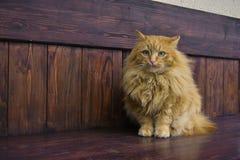 Pattes pelucheuses grises de chat Photo libre de droits
