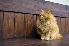 Pattes pelucheuses grises de chat Photos libres de droits