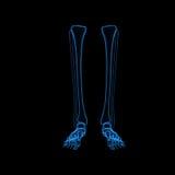 Pattes squelettiques illustration stock