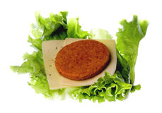 Patty, cheese, lettuce plant, isolated on white background Stock Photo